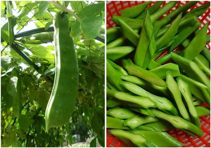 Sword beea pods and sliced sword bean pods.