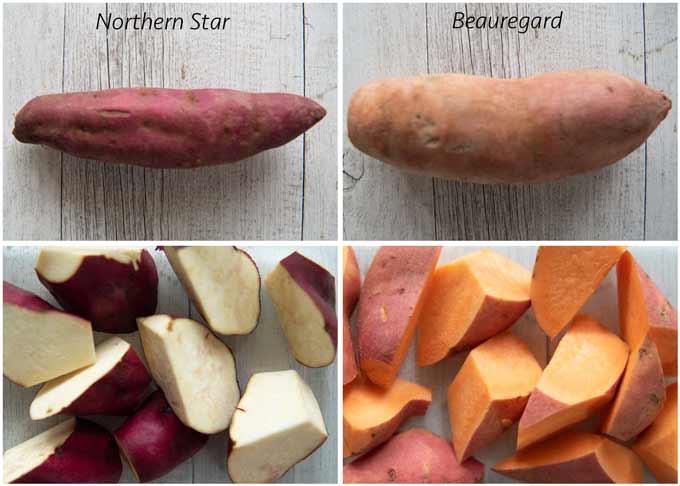 Comparison between Northern Star & Beauregard sweet potatoes.